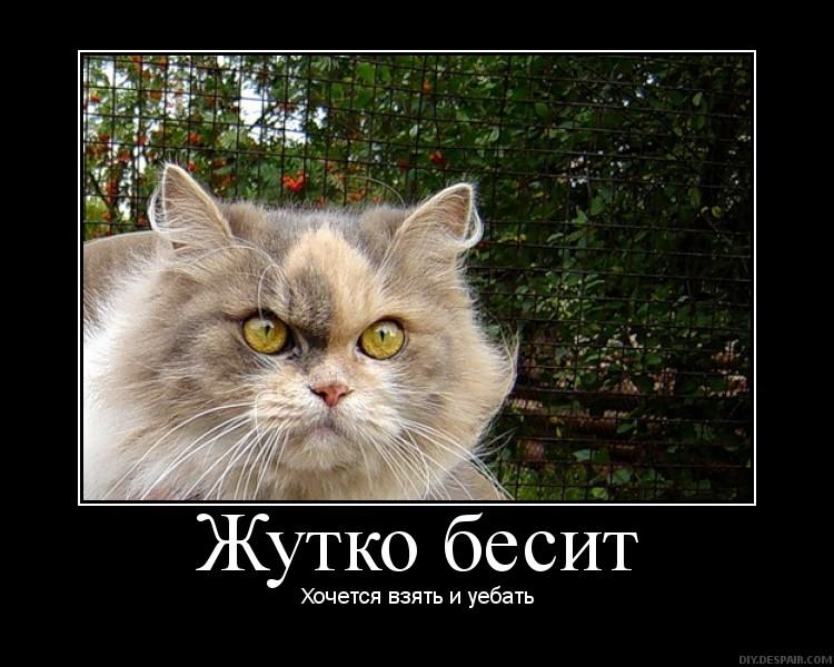 """""""Плотницкий кладет людей пачками. Луганские бандиты не будут нами править. Хер вам!"""", - атаман Косогор восстал против """"ЛНР"""" - Цензор.НЕТ 6589"""